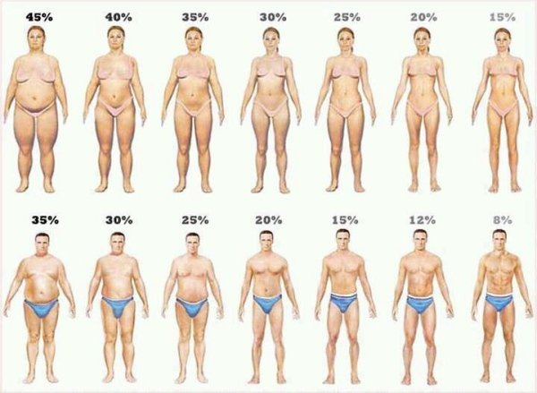 body fat percentage pictures, Compare Image Body Fat Calculate